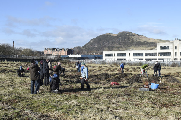 Pic Greg Macvean - 18/02/2016 - 07971 826 457 Greenfingered residents of Craigmillar come together to support a planting day held by the EDI Group and City of Edinburgh Council in partnership with Edinburgh and Lothians Greenspace Trust. Willow trees are planted in the area behind Craigmillar Library -